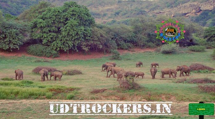 Chinnar-with-Elephants
